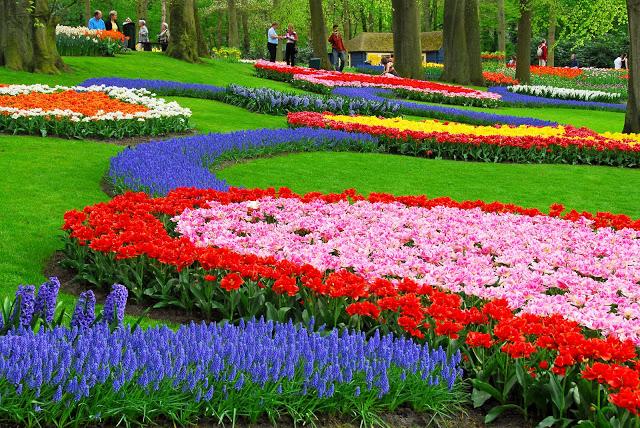 Flores em Inglês