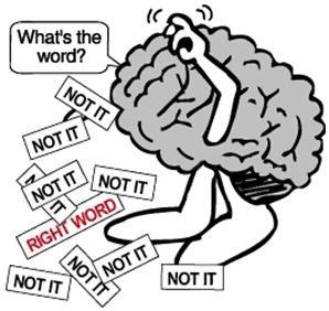 Cérebro e as Palavras Vazias